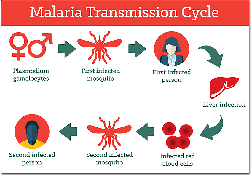 Malaria: per Sofia stesso ceppo dei due bimbi ricoverati