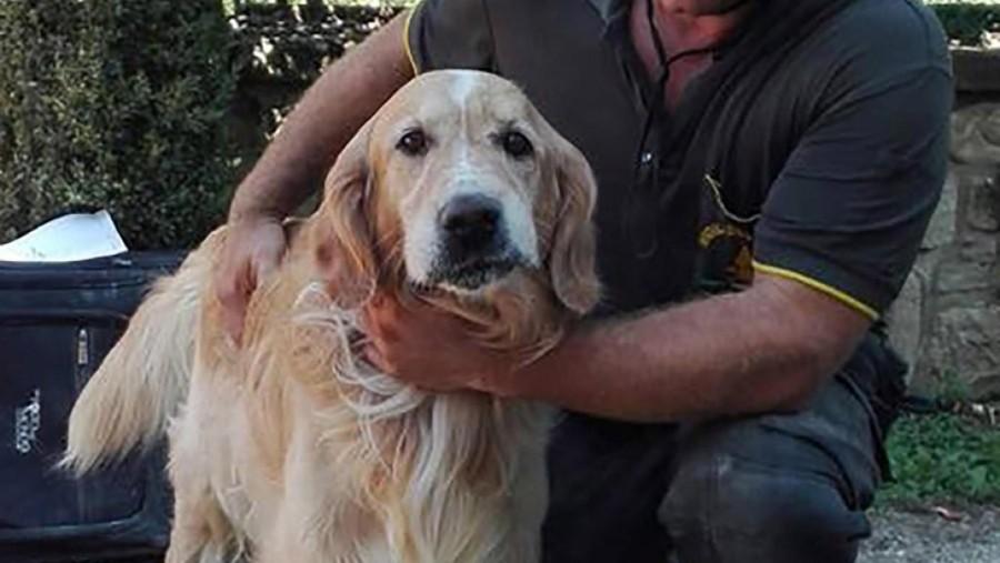 Il 'miracolo' del cane Romeo, salvo dopo 10 giorni sotto le macerie